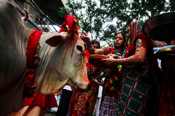 Cow In Hinduism