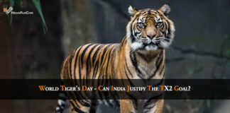 Tiger's Day 2019, 3000 Tigers in India