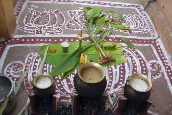 Pongal: 4 Days To Thank The Sun