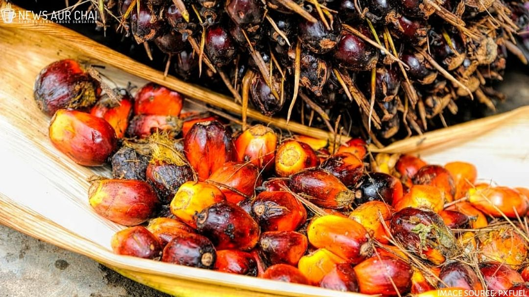 Major Palm Oil Problem: Ethical Take
